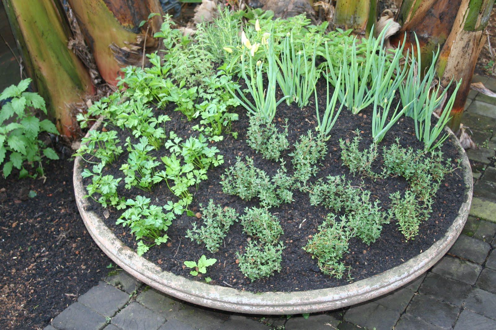 jardins quintal pequeno:Horta Em Casa