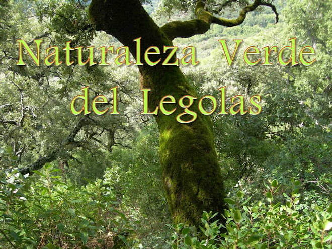 NATURALEZA VERDE DEL  LEGOLAS