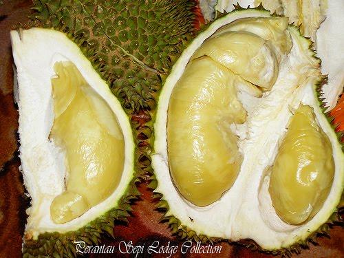 http://3.bp.blogspot.com/_UNoVLBp5Png/TE8IIBlJTSI/AAAAAAAABRs/tfIuBRo9TNE/s1600/durian+monthong.jpg