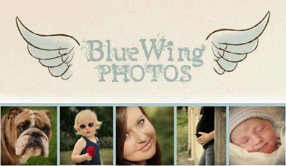 BlueWing Photos
