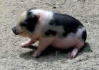 Top 10 de los animales mas veloces, feos entre otros
