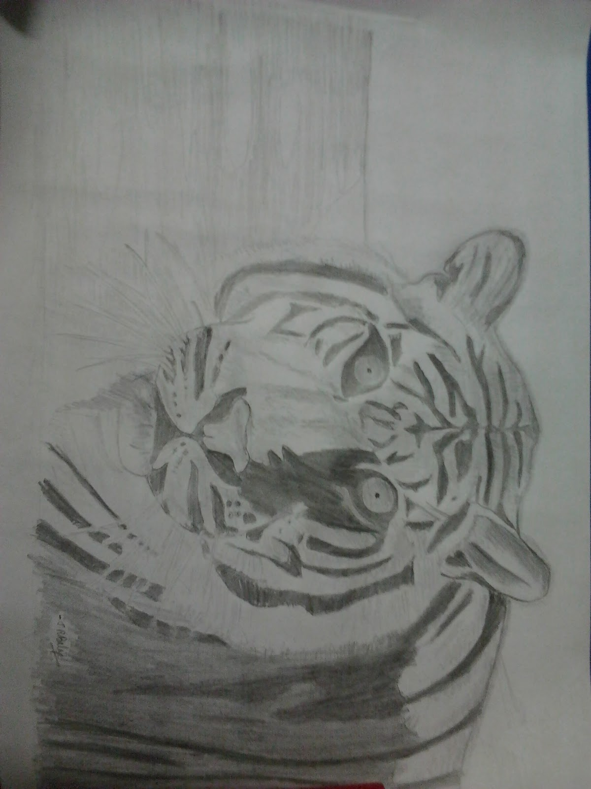 Pencil Drawings Tiger