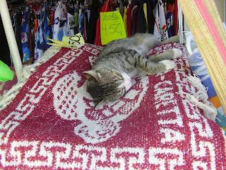 Lazy cat in a Tsivili supermarket