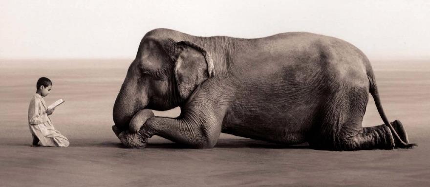 En vidéo : un éléphant débrouillard étonne les chercheurs