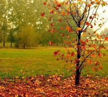 en el olvido ocre melancolicas se dibujan las hojas...
