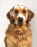 Cómo bañar a tu perro?