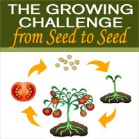 Seed Challenge