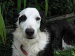 Alcuni rimedi naturali per la salute dei nostri cani