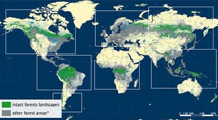 Blog Pense Verde  RBS TV Santa Maria  Sustentabilidade Arte e