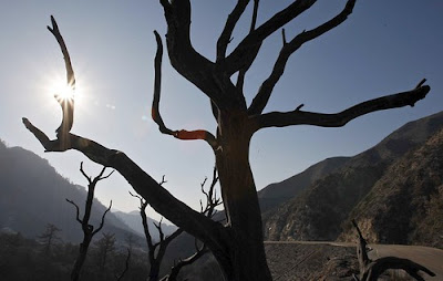 >156,000 acres or 1 quarter of Angeles National Forest a Wasteland!