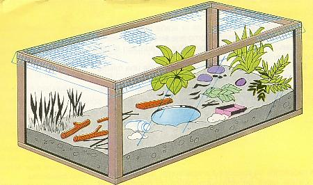 Como hacer un terrario taringa - Como construir un terrario ...