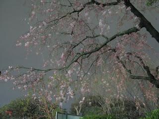 Meiji Jingu Gaien, Tokyo.