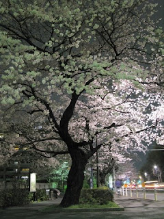 Meiji Jingu Gaien yozakura.