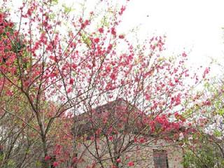Blossom in Shinjuku Gyoen Park, Tokyo.