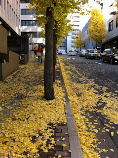 Ginkgo trees