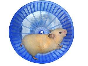 hamster-dans-une-roue-thumb3314299.jpg