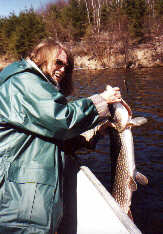 Red Lake Northern Pike caught on dead bait