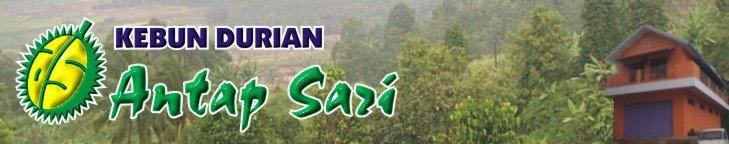 Kebun Durian Antap Sari
