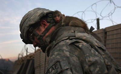 Monkey on soldier's back