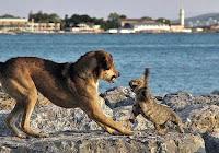 Cat swats dog