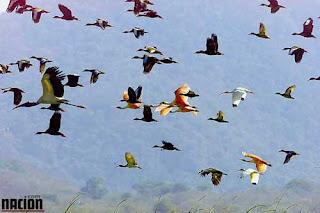 aves+de+Costa+Rica