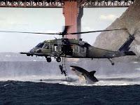 shark+attack