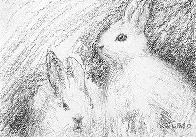 ACEO easter bunnies sketch