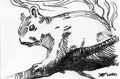 squirrel pen and ink sketch