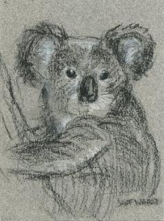 koala sketch aceo
