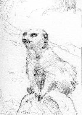 meerkat sketch