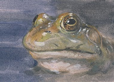 frog aceo painting