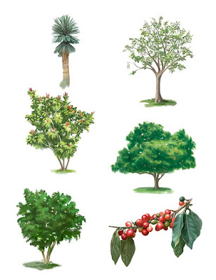 tree illustrations