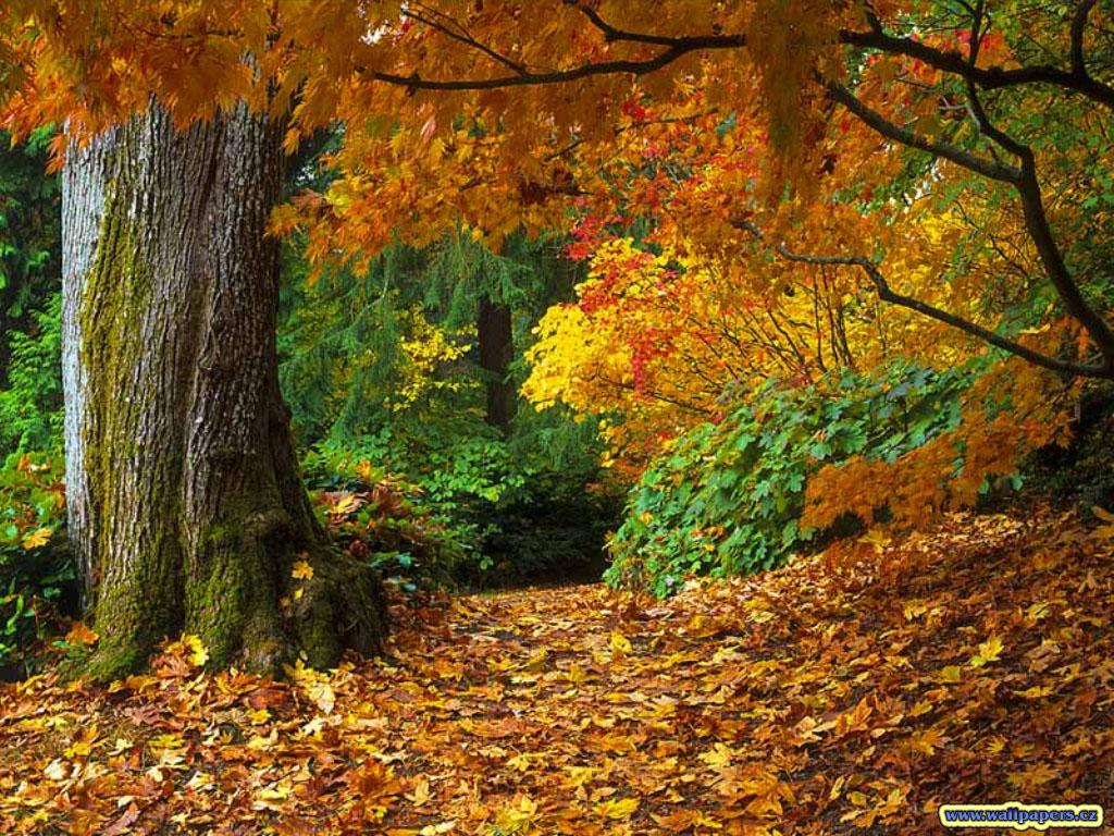 http://3.bp.blogspot.com/_UZitWL5K3Gw/TL750q-3woI/AAAAAAAAAfM/IUquV23mEEo/s1600/fall-of-autumn-leaves-wallpaper.jpg