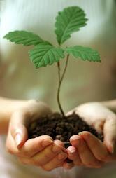 Ας φυτέψουμε όλοι ένα δεντράκι!