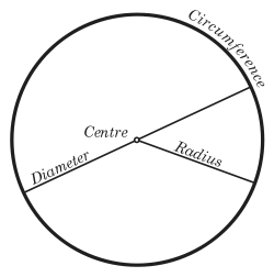 mrs. yollis' classroom blog: circle: radius and diameter exploration!, Human Body