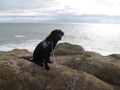 Dagan in his puppy coat on a cliff overlooking the ocean