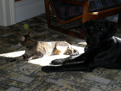 Simba lying in a square of sun light with Dagan next to the sunny spot