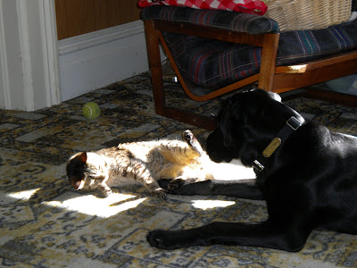 Dagan pawing at Simba in her sunny spot. Simba it rolling over on her back, pawing at Dagan