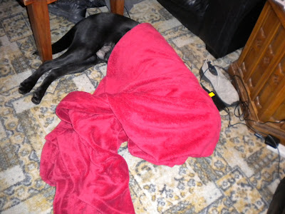 Red blanket on the ugly carpet with the back half of Nassau sticking out