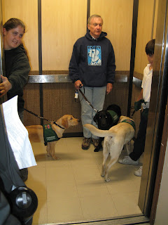 The pups and raisers entering the elevator