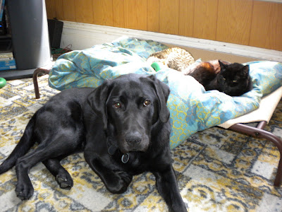 Dagan looking sadly at the camera. Yogi, still curled up on the bed is looking at him with a bit of whatever in his eyes