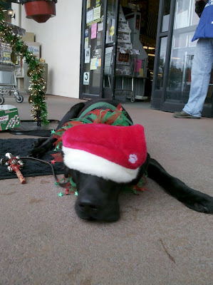 Dagan lying on his GTB mat, head on the ground with his Santa hat over his eyes