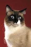 Dasar Memelihara dan Merawat Kucing