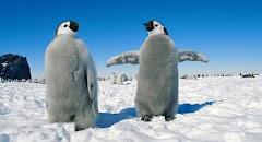 pinguini...