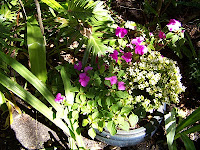 Courtyard Garden Makeover 11  Courtyard+and+Pond+Gardens+005 St. Francis Inn St. Augustine Bed and Breakfast