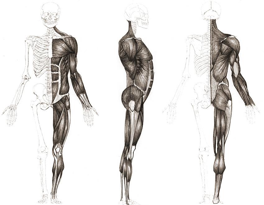 Comic Americano temporada 2010: Imagenes para ejercicio de anatomía