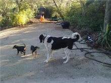 Los dos hemanitos cachorros en su nuevo hogar, con nuevos compañeros de juegos