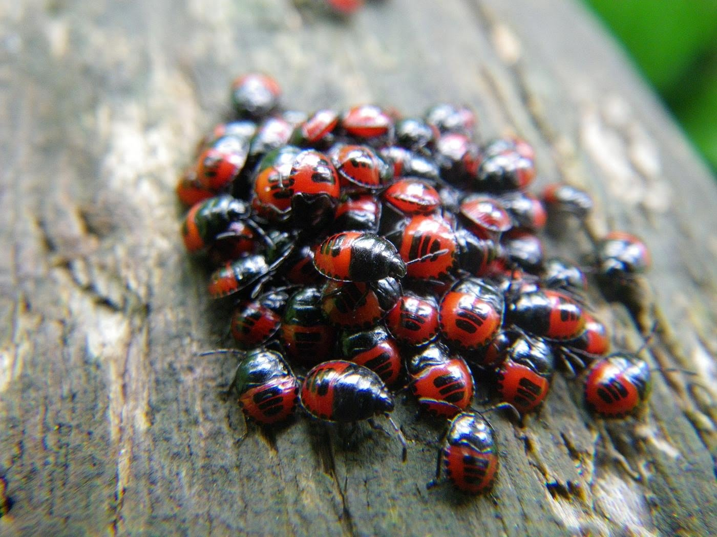 Get Rid of Ladybugs with the Ladybug Removal Report