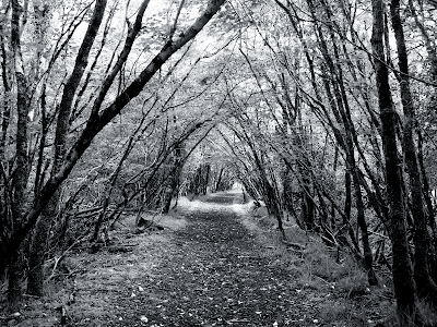 ابيض واسود Black+and+White+forest+path