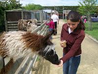 Sassi (rechts) und ein Lama